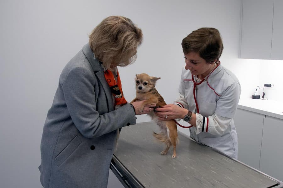 Onderzoek hart & longen hond DAP Caroline De Brabandere